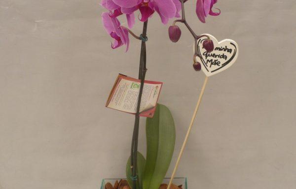 Orquídea Phalaenopsis com cachepot de vidro